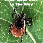 Lyme gets in the way
